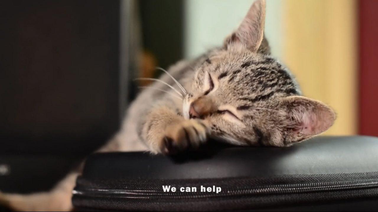 Pets in Distress Video